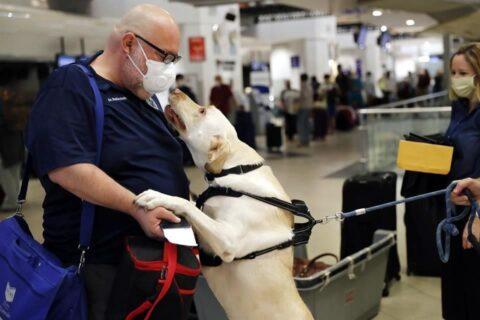 Buscan EU y GB entrenar canes para detectar virus